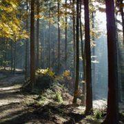 ELS Experience Schwarzwalde Entdecker Summer